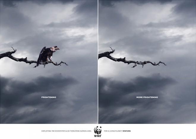 carteles en contra del maltrato de animales 9
