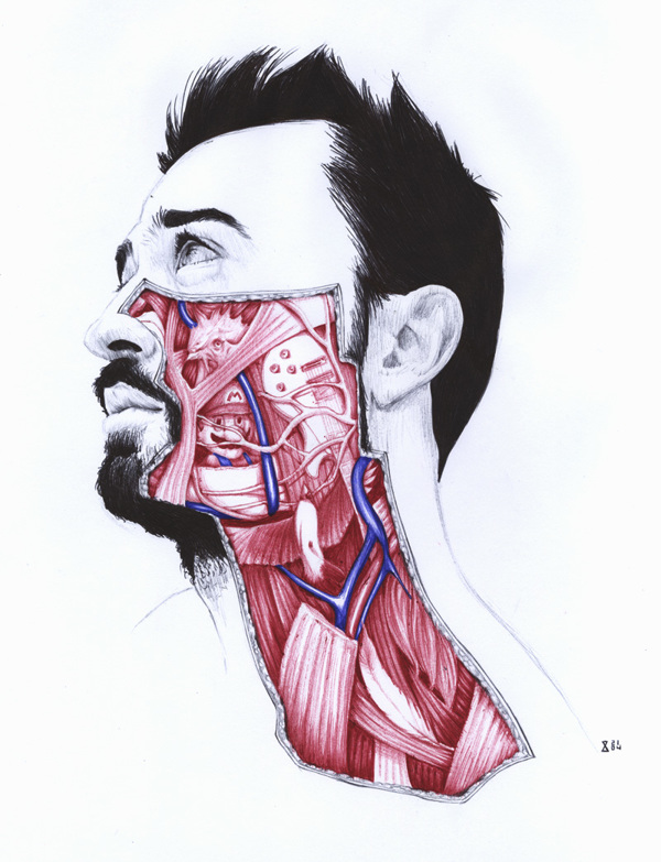 extrañas ilustraciones anatomia 4