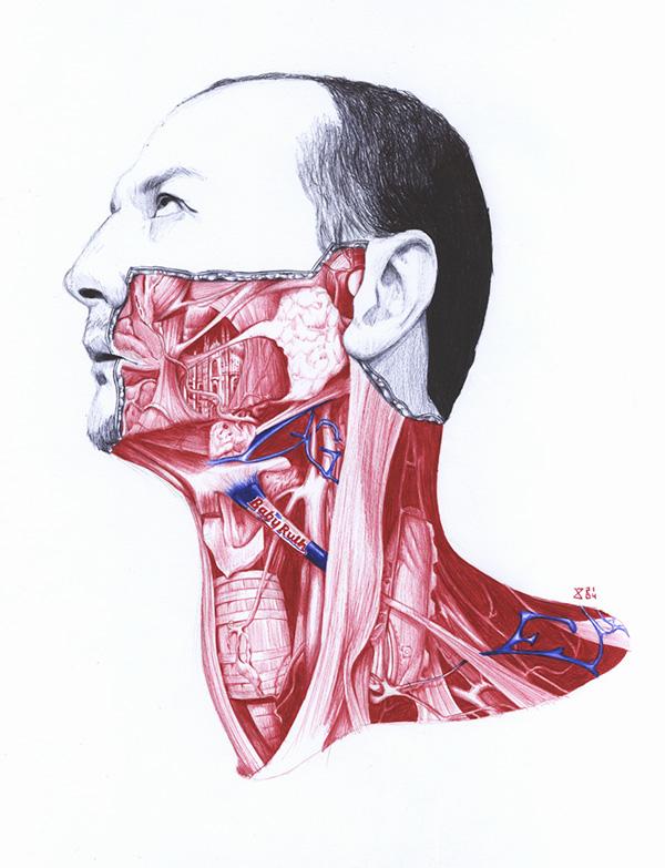 extrañas ilustraciones anatomia 6