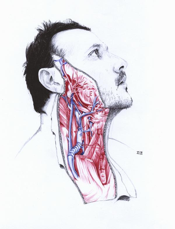 extrañas ilustraciones anatomia 8