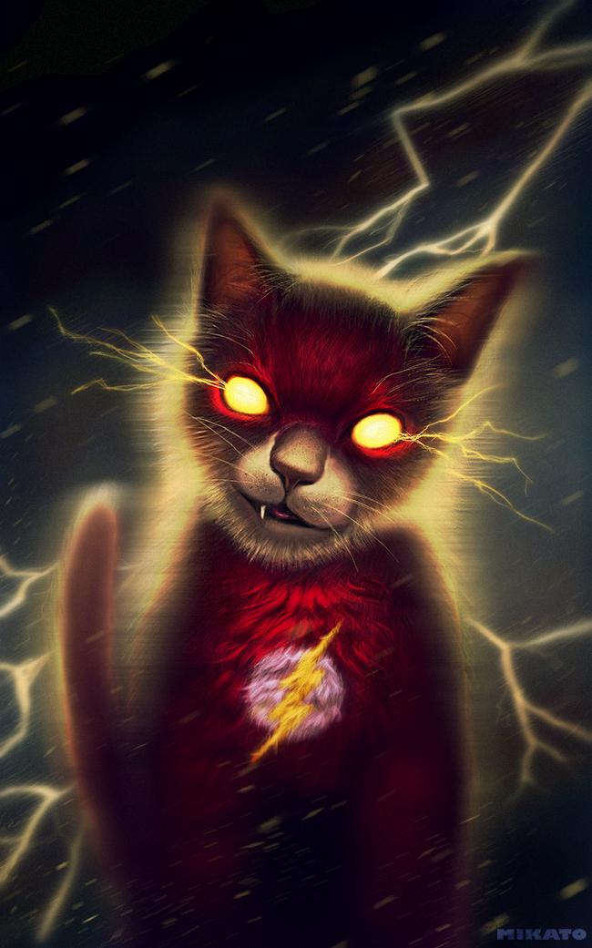 naionmikato gato flash