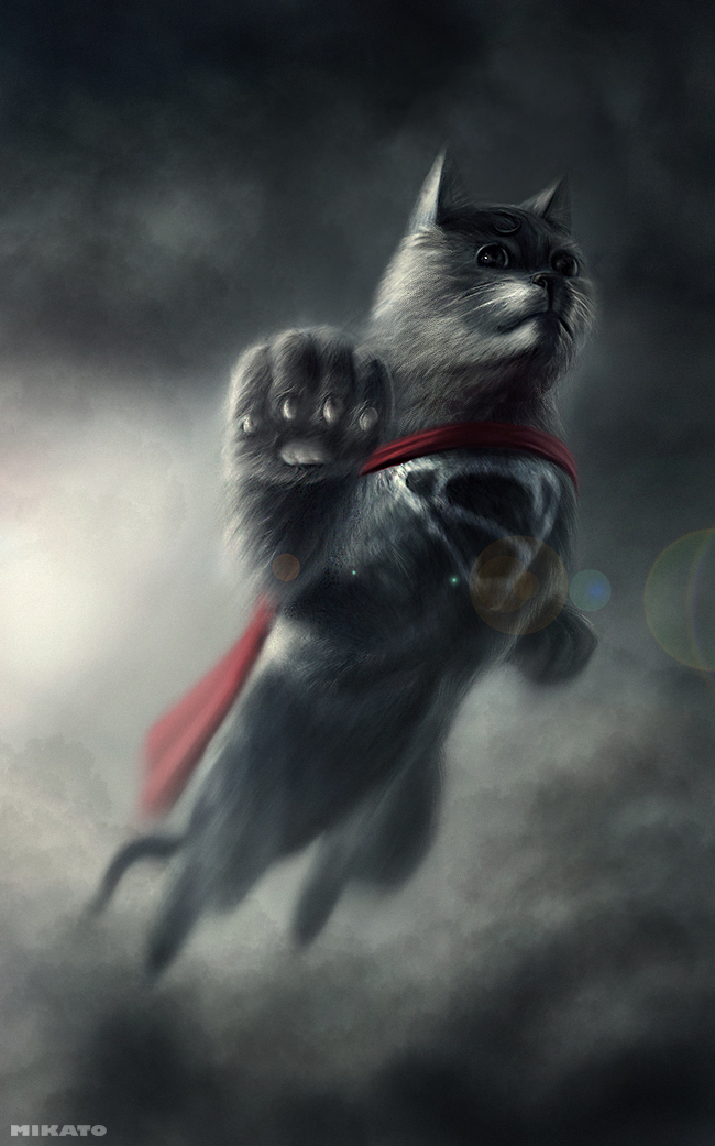 naionmikato gato superman