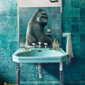 national gepgraphics selfies animales gorila