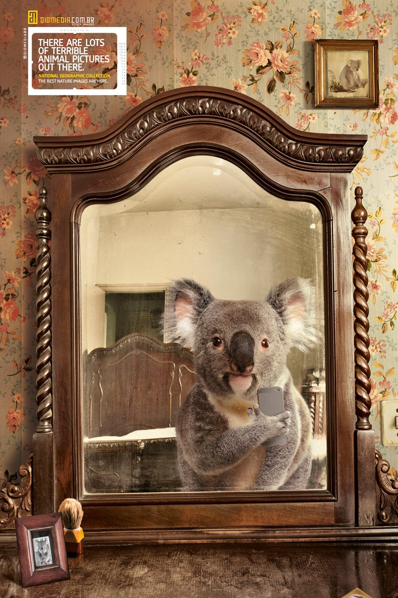 national gepgraphics selfies animales koala