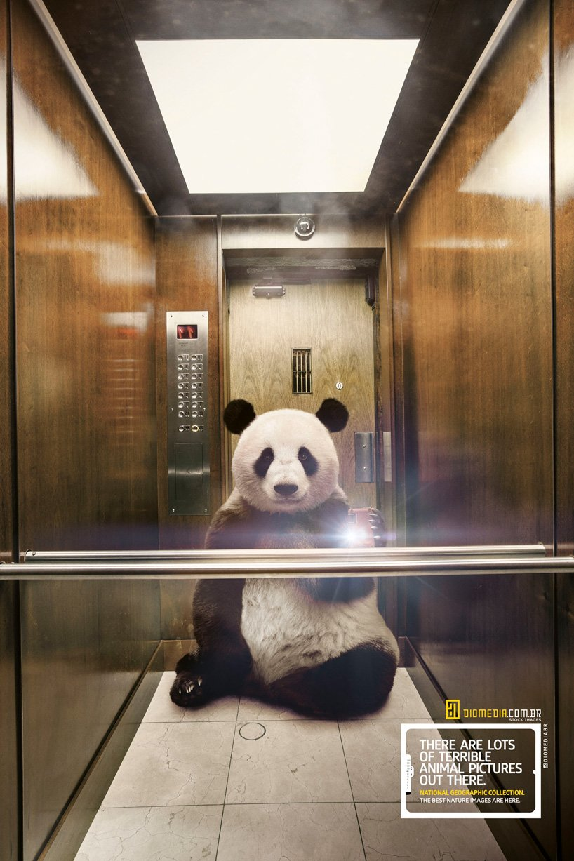 national gepgraphics selfies animales panda