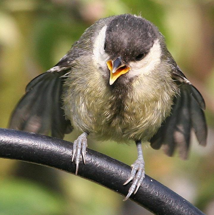 Fotos de aves Chris Morgan 4