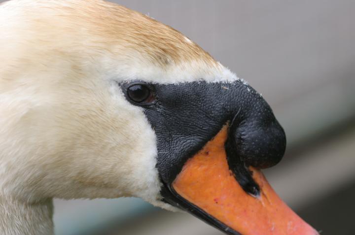 Fotos de aves Chris Morgan 7
