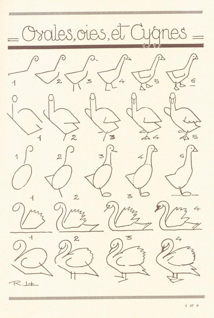 Como dibujar cisnes