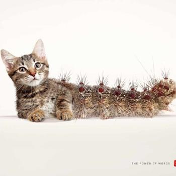 publicidad scrabble cat-tus