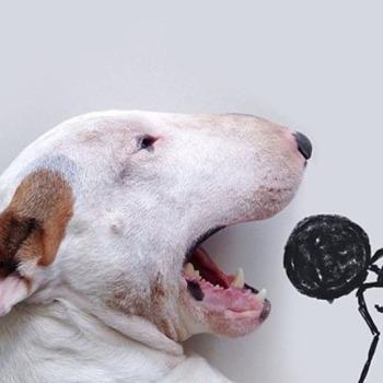 Bull Terrier ilustraciones 1