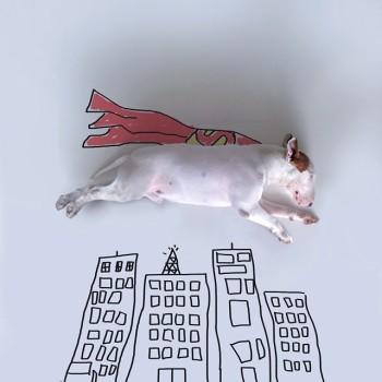 Bull Terrier ilustraciones 10