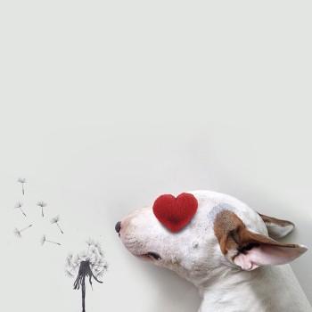 Bull Terrier ilustraciones 3