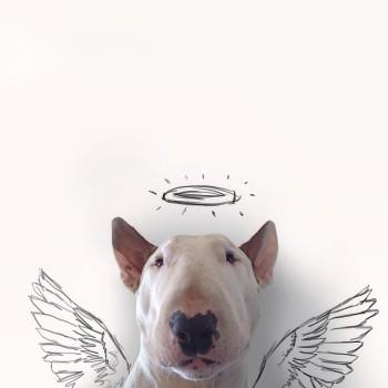 Bull Terrier ilustraciones 4