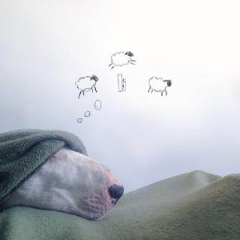 Bull Terrier ilustraciones 7