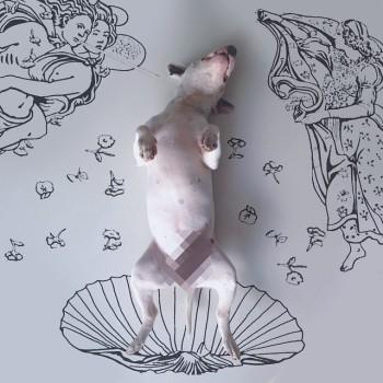 Bull Terrier ilustraciones 9