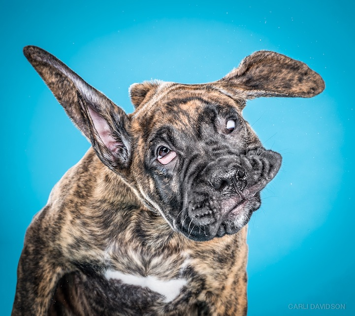 Carli Davidson Pet Photography