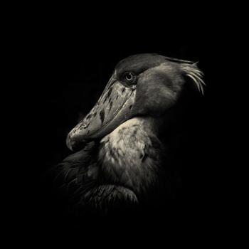 fotos animales salvajes bird
