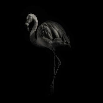 fotos animales salvajes flamingo