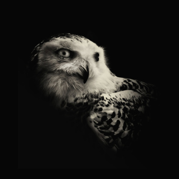 fotos animales salvajes halcon