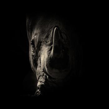 fotos animales salvajes rinoceronte