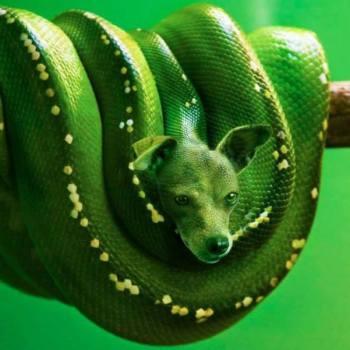 fotos de animales fusionados 12