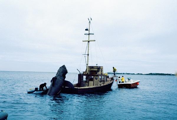 fotos set grabacion tiburon 1