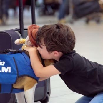 klm-beagle