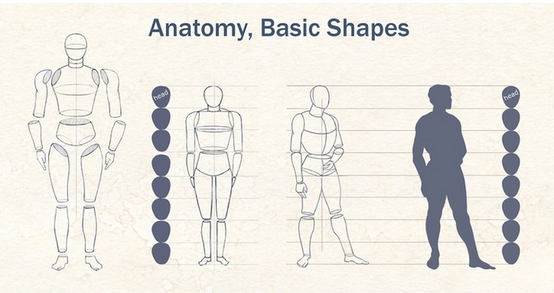Vistoso Dibujo Básico De Anatomía Molde - Anatomía de Las ...