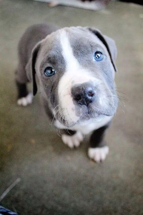 fotos tiernas cachorros 10