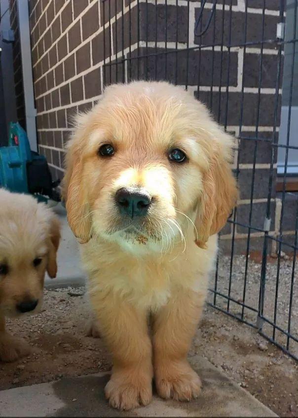 fotos tiernas cachorros 11