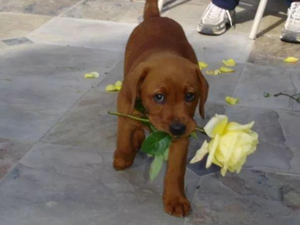 fotos tiernas cachorros 12