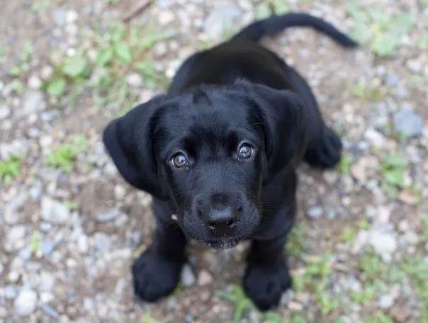 fotos tiernas cachorros 13