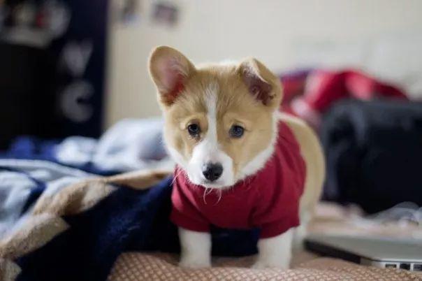 fotos tiernas cachorros 14