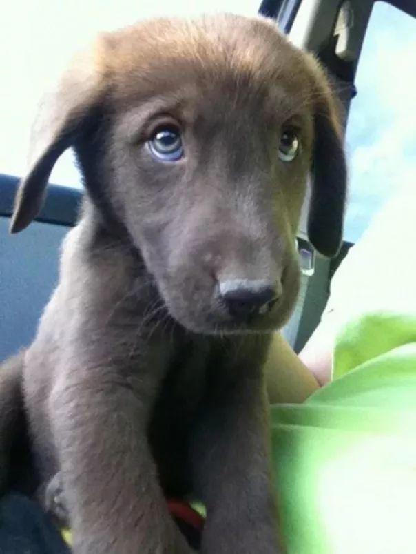 fotos tiernas cachorros 15