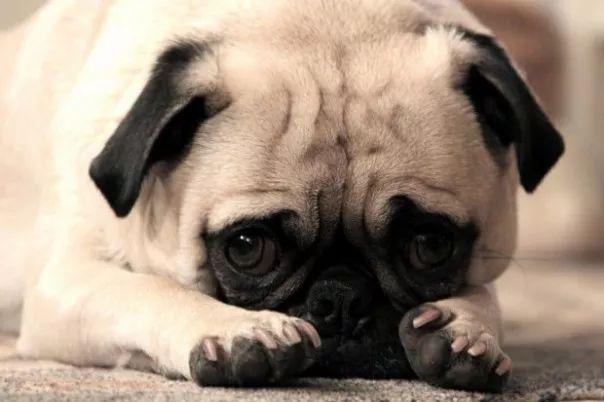 fotos tiernas cachorros 3