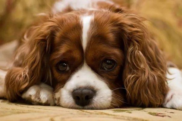 fotos tiernas cachorros 4