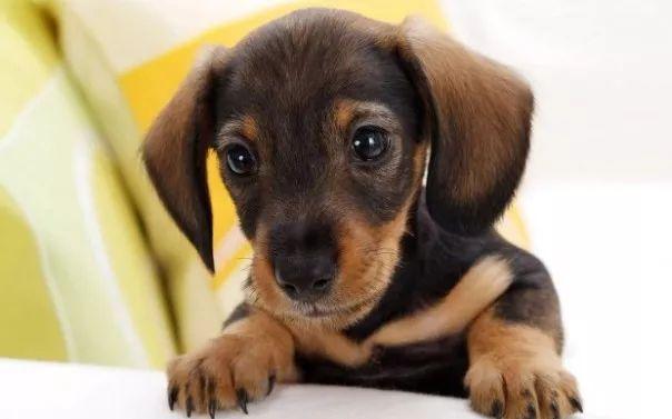 fotos tiernas cachorros 7