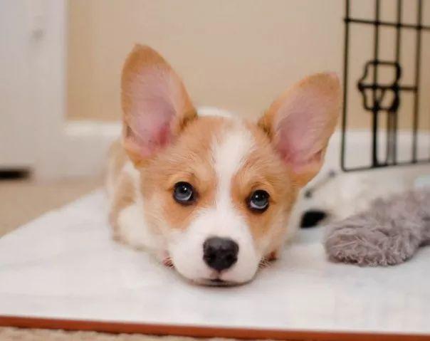 fotos tiernas cachorros 8
