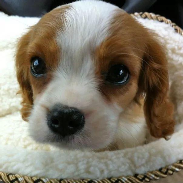 fotos tiernas cachorros 9
