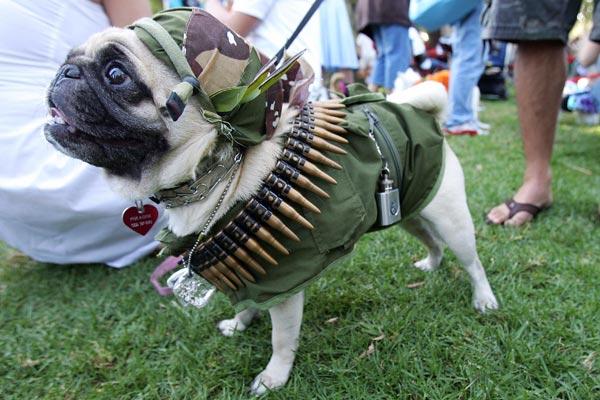 perro soldado