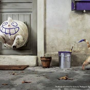 publicidad animales 1