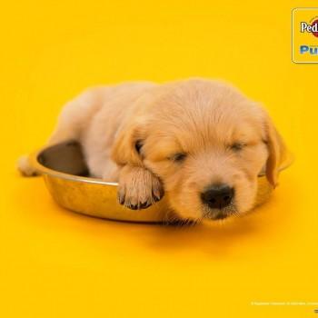 publicidad animales 11
