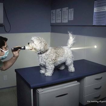 publicidad animales 14