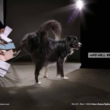 publicidad animales 15