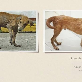 publicidad animales 23