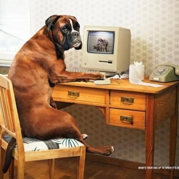 publicidad animales 24