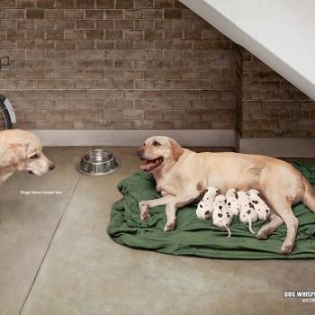 publicidad animales 3