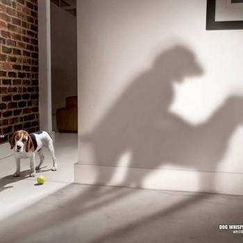 publicidad animales 4