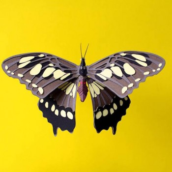 Diana Beltran Herrera esculturas de papel aves mariposas 3