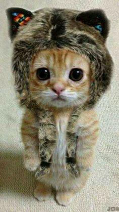 Gatito listo para el invierno